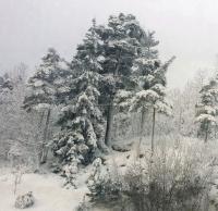 Tung snø