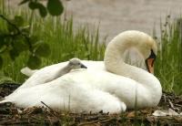 Antatt - I mammas trygge favn
