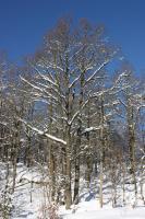 Nakne trær mot blå himmel