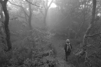 Antatt: I skogen