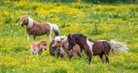 Heste idyll