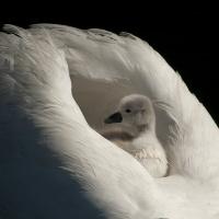 Gull - Omsorg