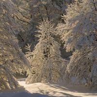 Hederlig omtale: Vinterskogen
