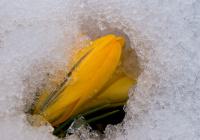 Hederlig omtale - Vinter møter vår