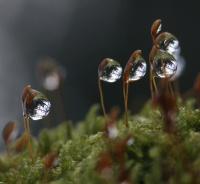 Hederlig omtale: Speiling fra skogsbunnen