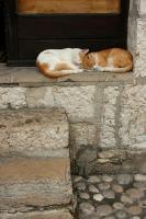 Kos på en trapp i Mostar