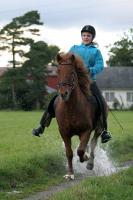 4.plass - Hestekrefter