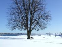 Hederlig omtale - Mannen under det store treet 2